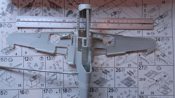 wingspan over thirty cm.jpg