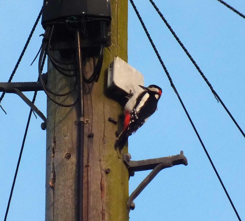 Woodie-Pole.jpg