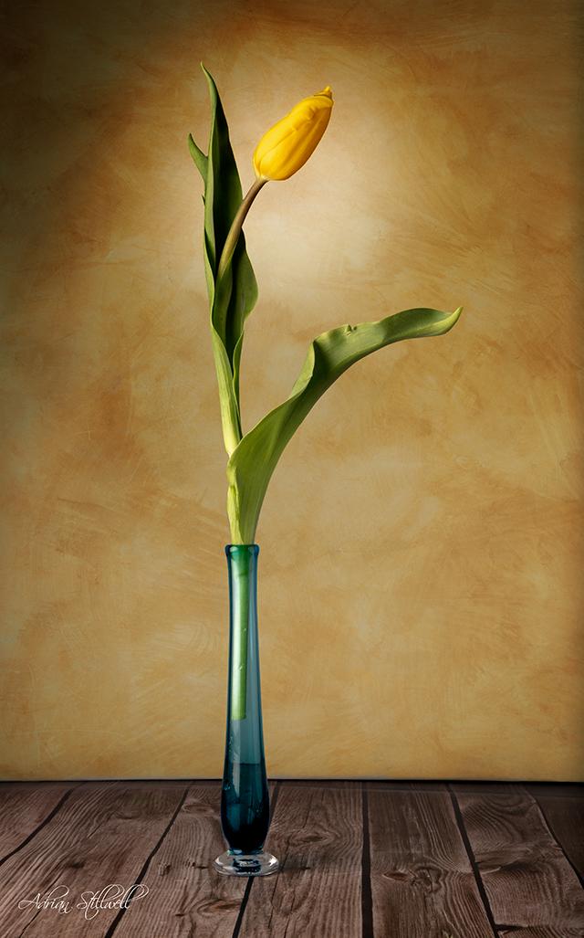 Yellow Tulip.jpg